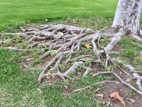 Protecting Tree Roots